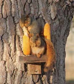 thumbnail_Squirrel.jpg