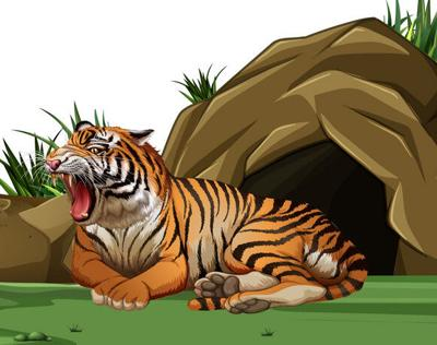 tiger-sleeping-in-front-of-the-cave-vector-16364720.jpg