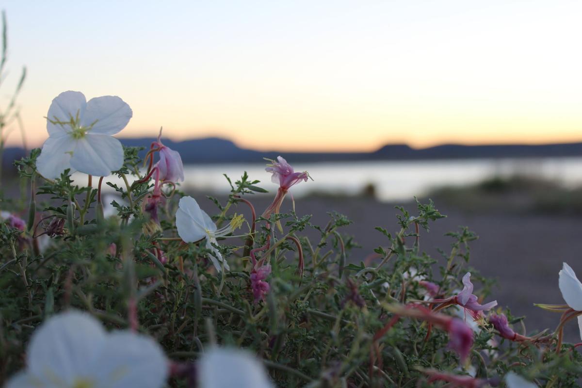 IMG_0028.JPG-flowers at dawn.JPG