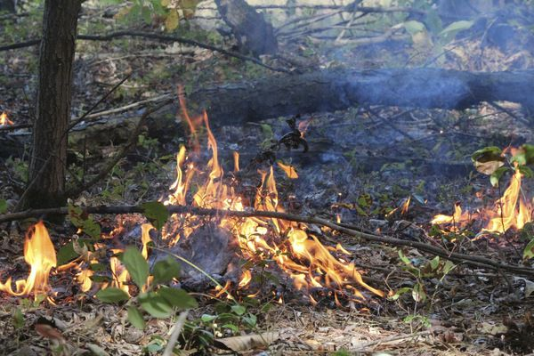 Prescribed burn promotes ecosystem in Hiawatha Forest