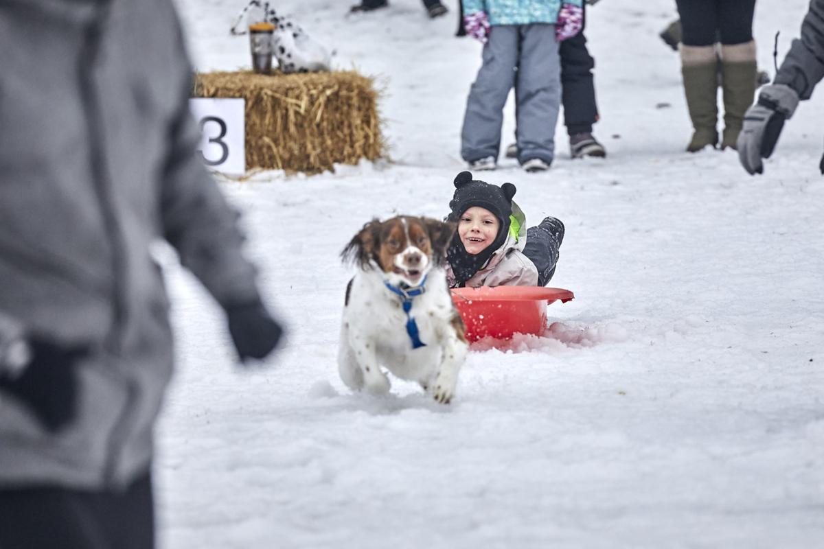 2 Winterfest Dogpull