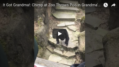 Kimmel names chimpanzee poop video 'Best Clip of 2017'