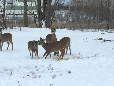 Whitmer vetoes bill that would have ended deer baiting ban
