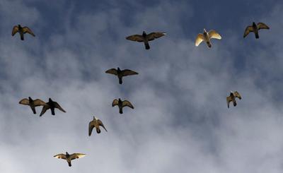 Odd News: Pigeon poops on lawmaker discussing pigeon poop problem