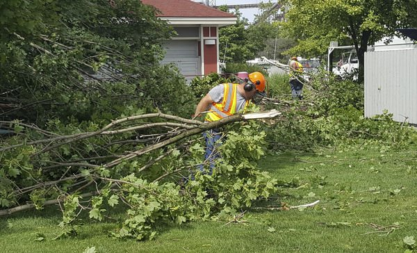 Winds tear down trees along GH waterfront