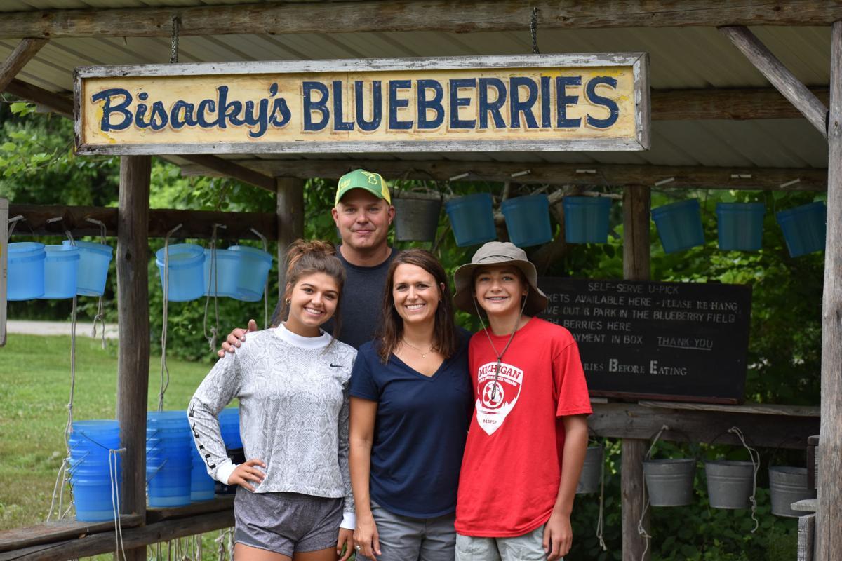 Blueberry Crop 2