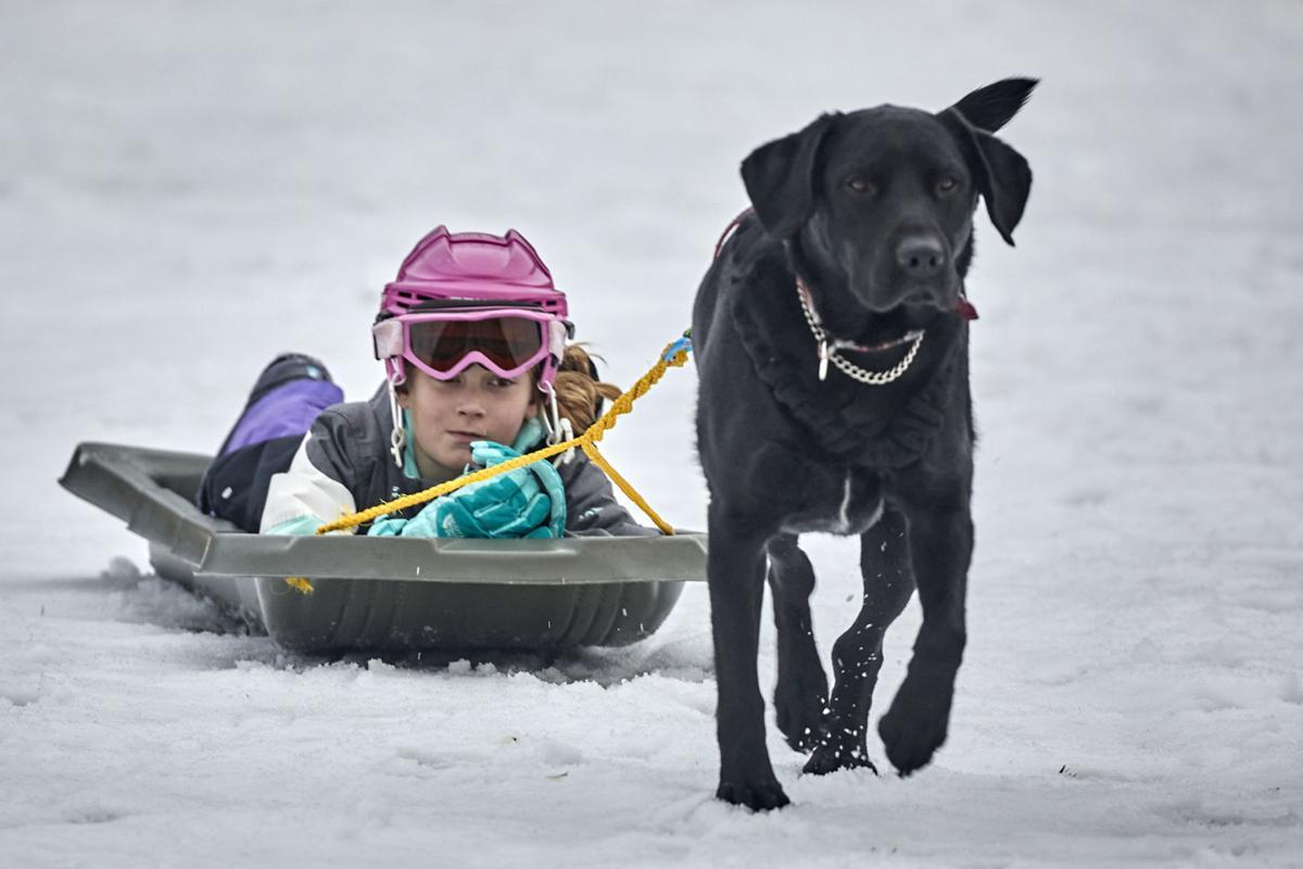 1 Winterfest Dogpull