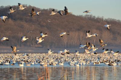 Flyway Day