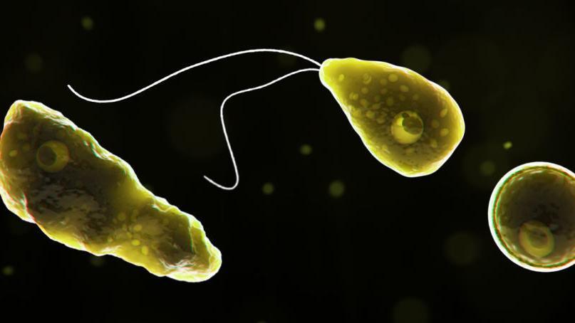 'Brain-eating' amoeba kills man who swam in water park - Greensboro News & Record thumbnail
