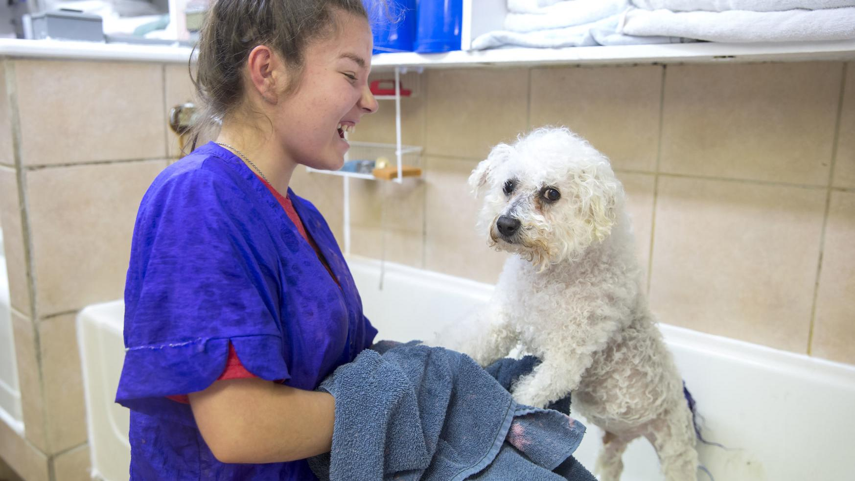 From Showing Dogs To Pampering Them Nanhall Pet Spa Turns 50