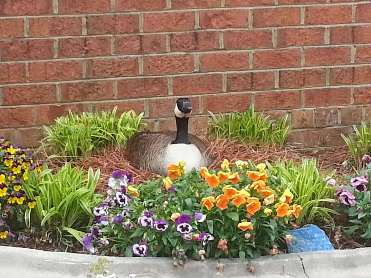 Your spring 2015 photos | Featured | greensboro.com