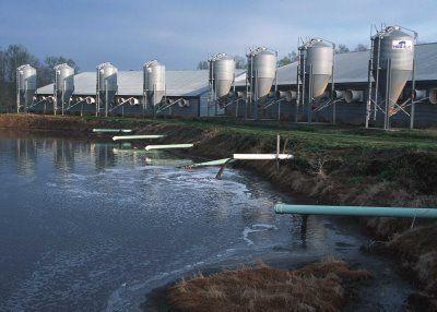 N.C. hog farm and waste lagoon