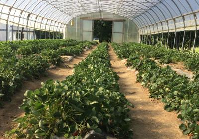 NCAT Farm greenhouse