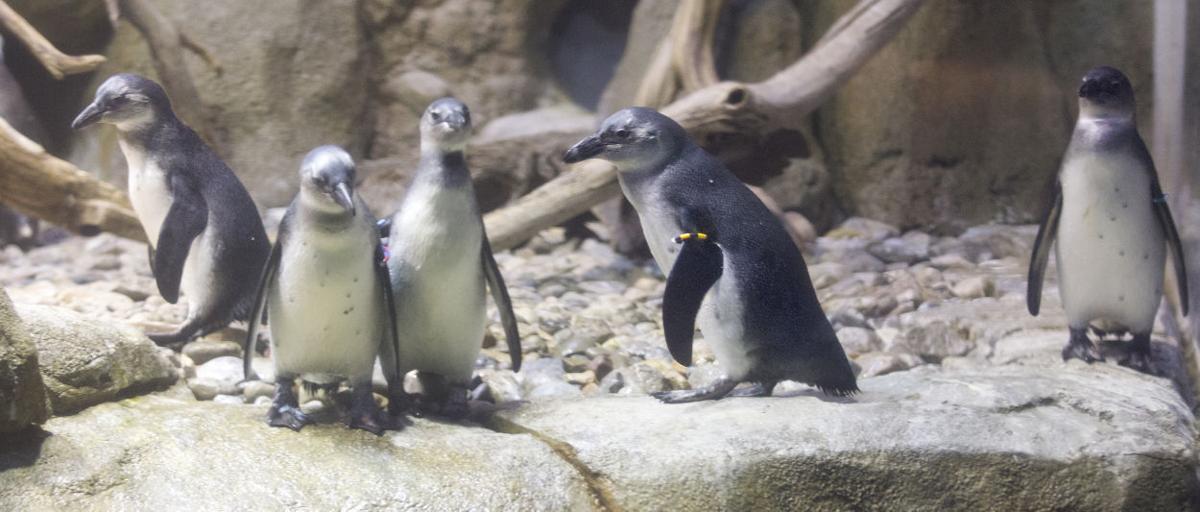 penguins 022415 02jr sends.JPG
