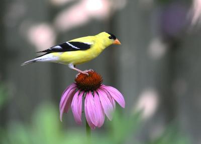 lif gardening birds 1.jpg