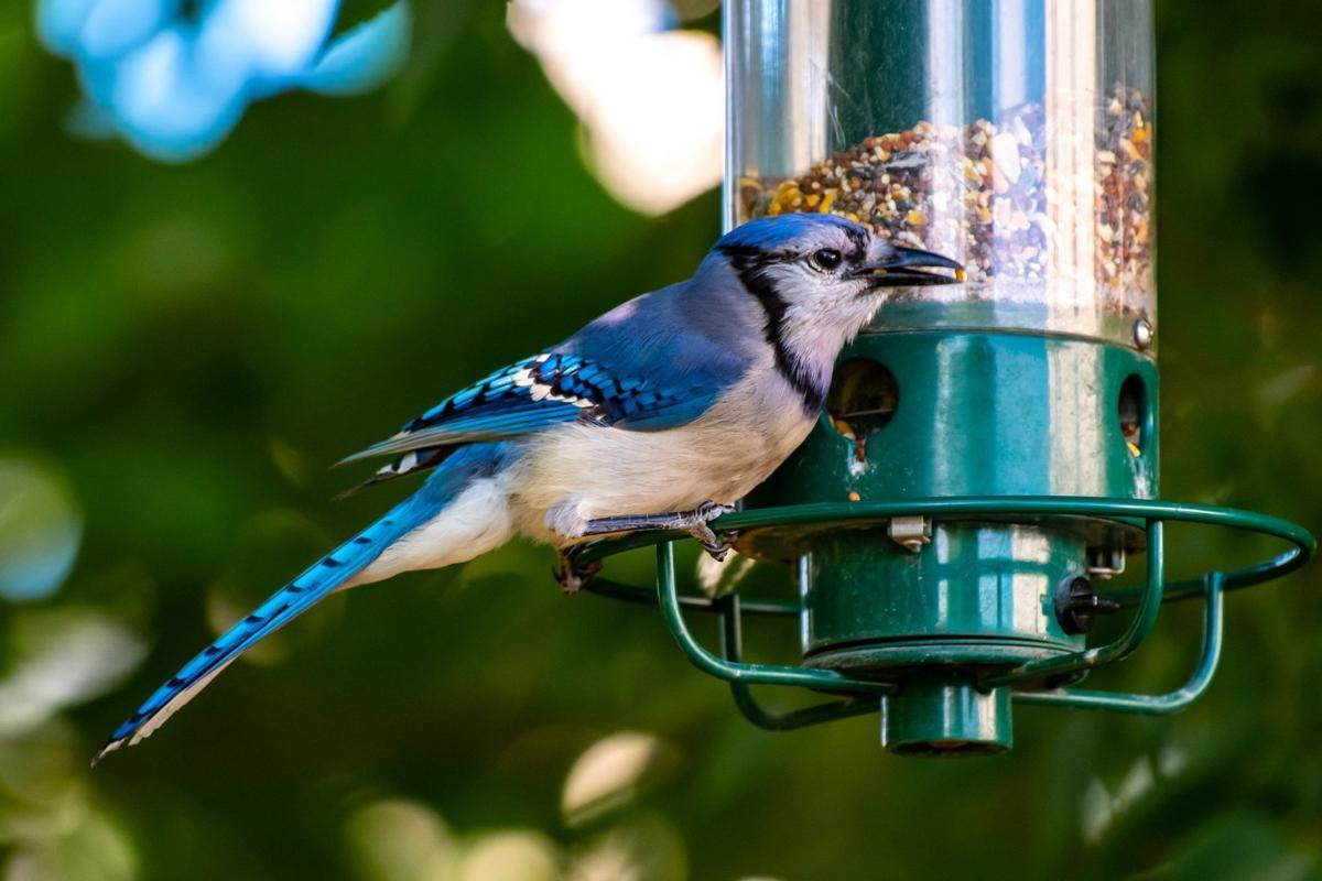 Bird feeder (copy)