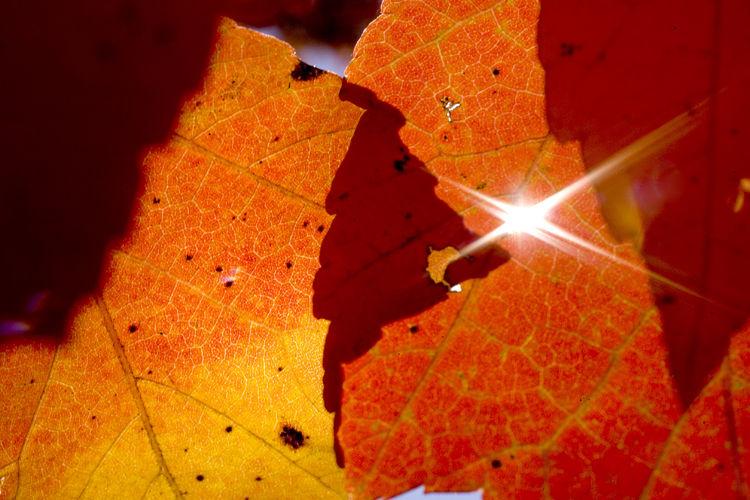 fall_color_2127071 (copy)