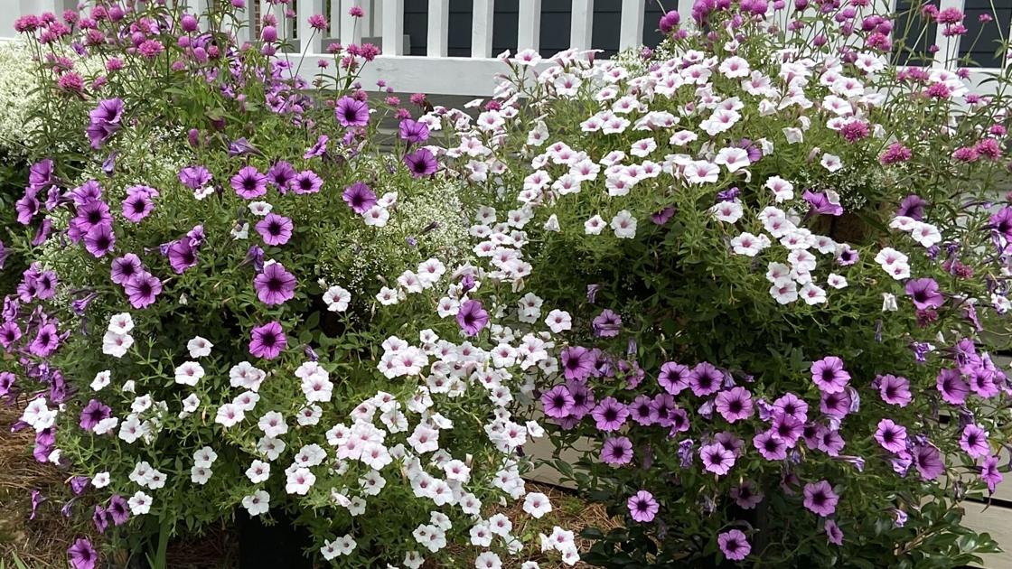 From Our Garden: Flowers offer outstanding, affordable curb appeal