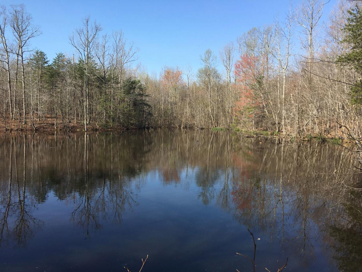 A pond on the Dan River Game Land (copy)
