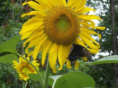 Share Your Garden Photos Lifestyles Greensboro Com