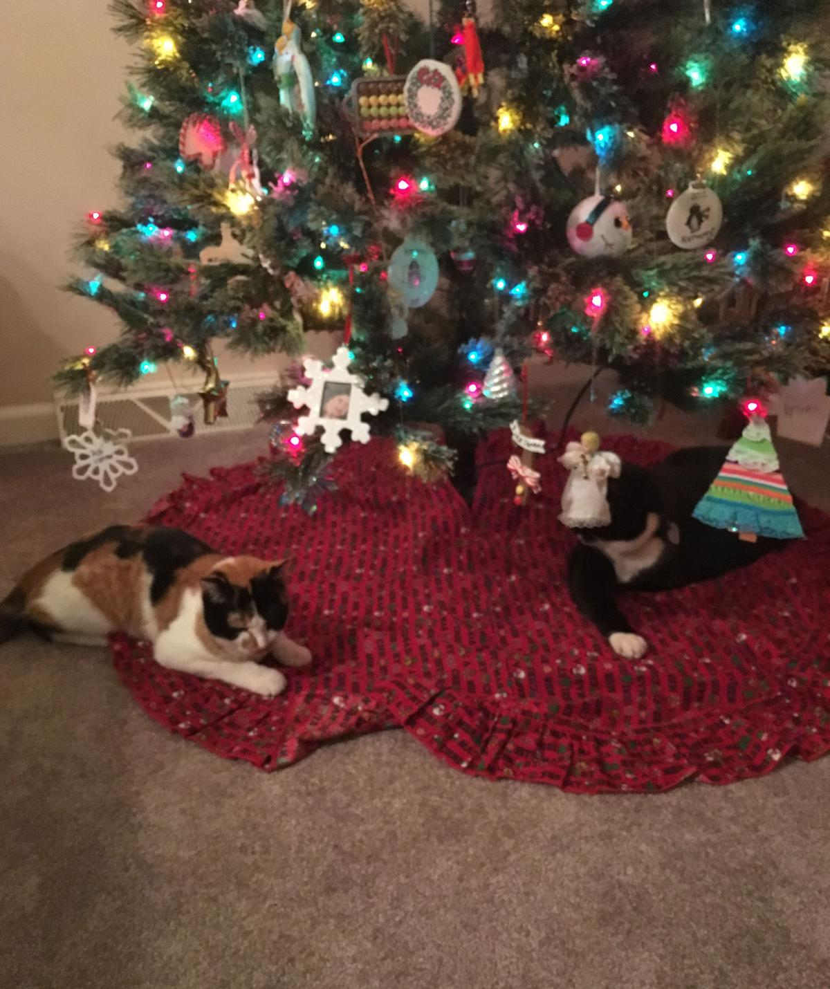 cats vie for space under christmas tree