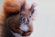 Scott Hollifield: And now, a public service announcement about meth-fueled attack squirrels