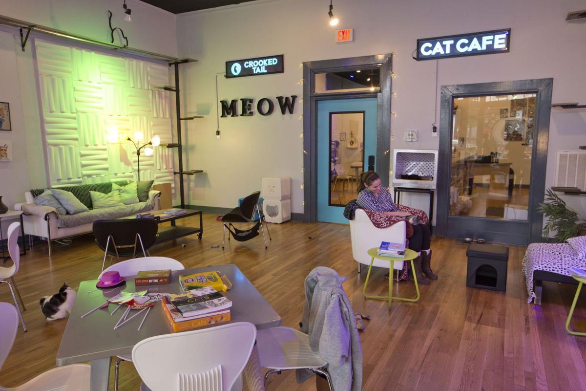 denver cat cafe