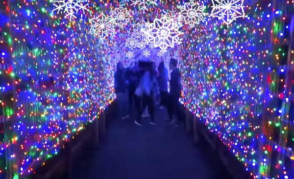 Winter Wonderlights Promo
