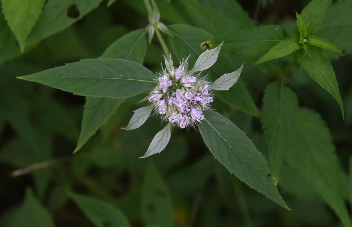 Buffalo Mountain Natural Area Preserve (copy)