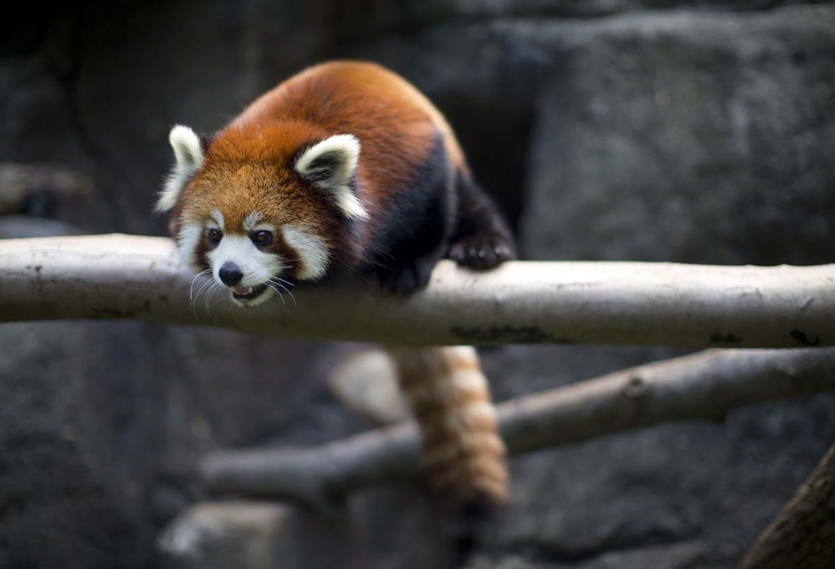 Zoo Trek