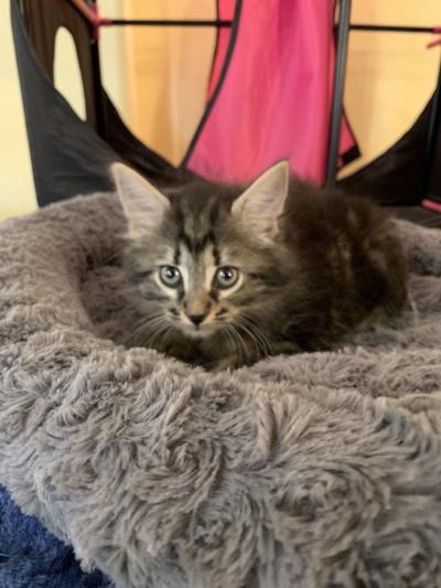 Pet of the Week: Cody