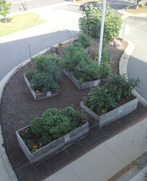 hp library 2nd floor shot of garden.jpg