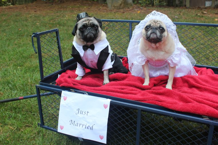 Pet Costume Contest Winnerore Reader Photos & bride and groom dog halloween costumes - Hallowen Costum Udaf