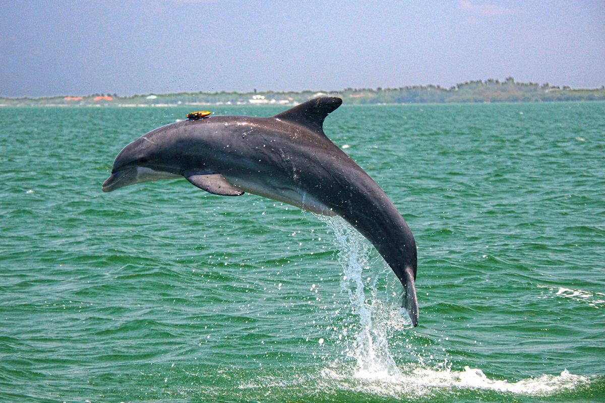 LIFE-SCI-DOLPHINMAN-MCT