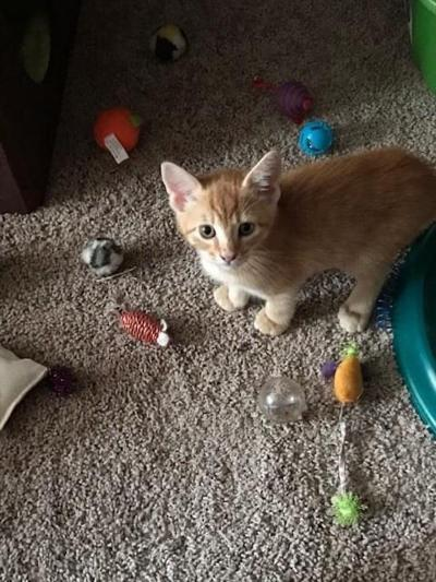 Pet of the Week: Leo