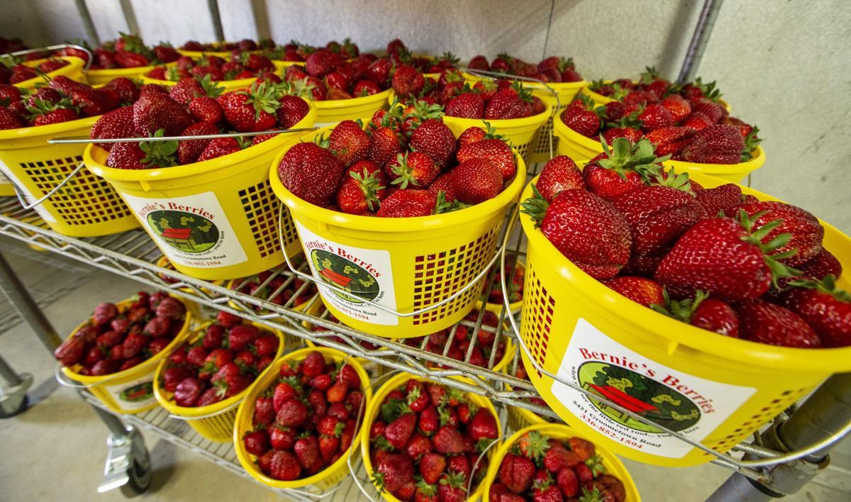 strawberry-photo