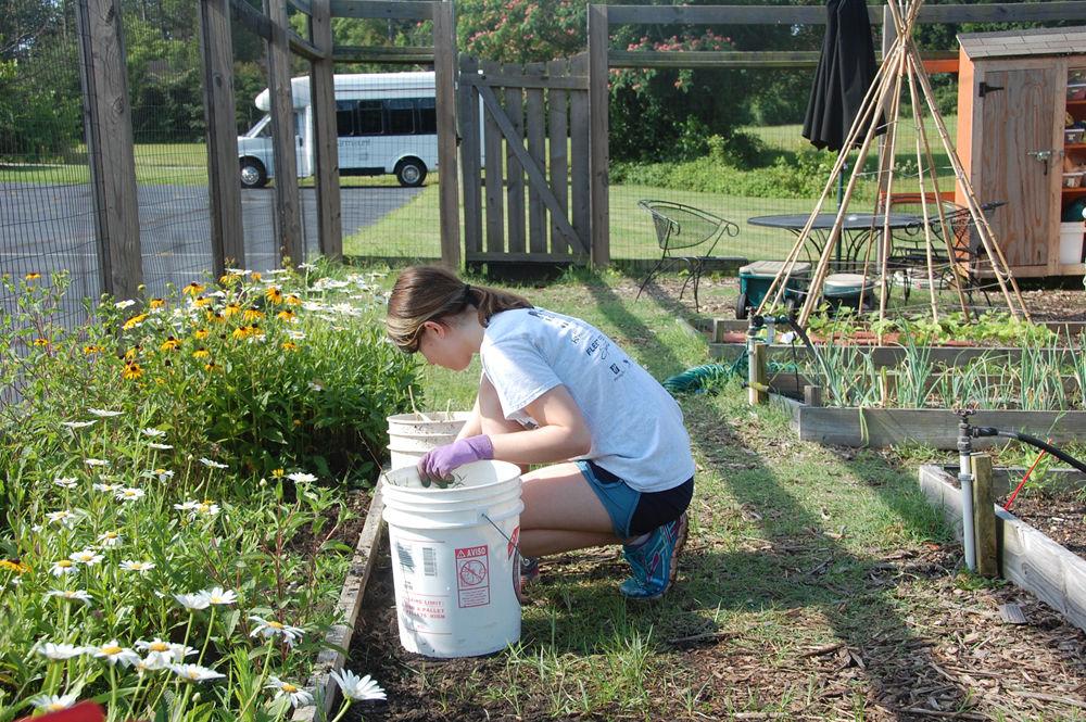 Starmount Gardening 1
