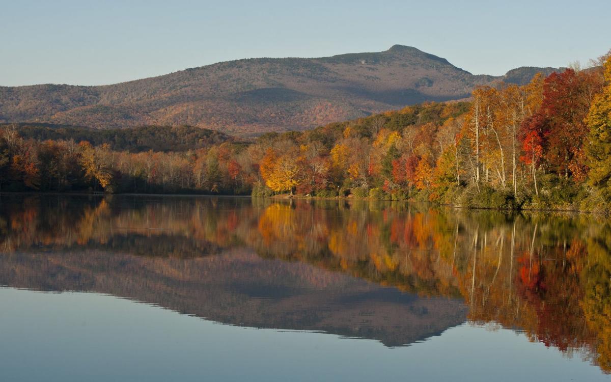 Fall leaves (copy)