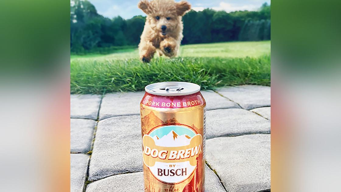 Busch will pay your pup $20,000 to be official dog brew taster