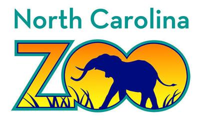 help n c zoo name the wild polar bear it recently adopted blog