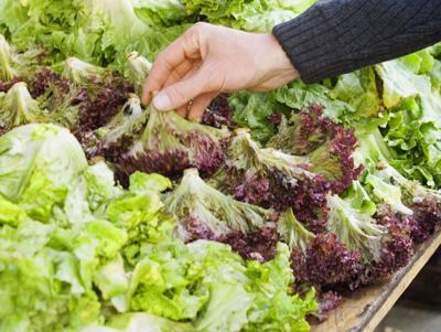 Farmers Market Lettuce Generic (copy)