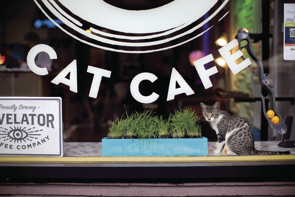 Crooked Tail Cat Cafe