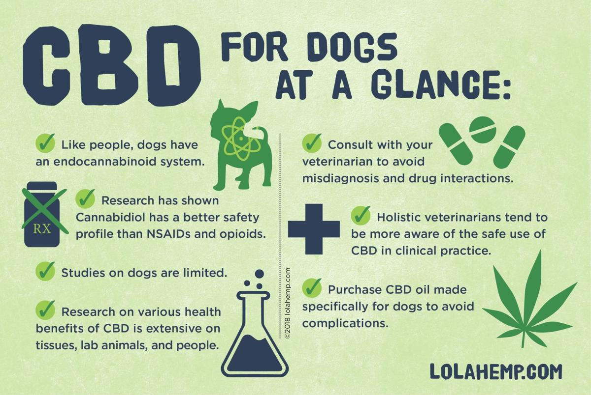 CBD For Dogs at a Glance