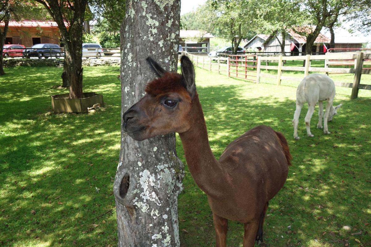 banner elk Apple Hill Farm 945a.jpg
