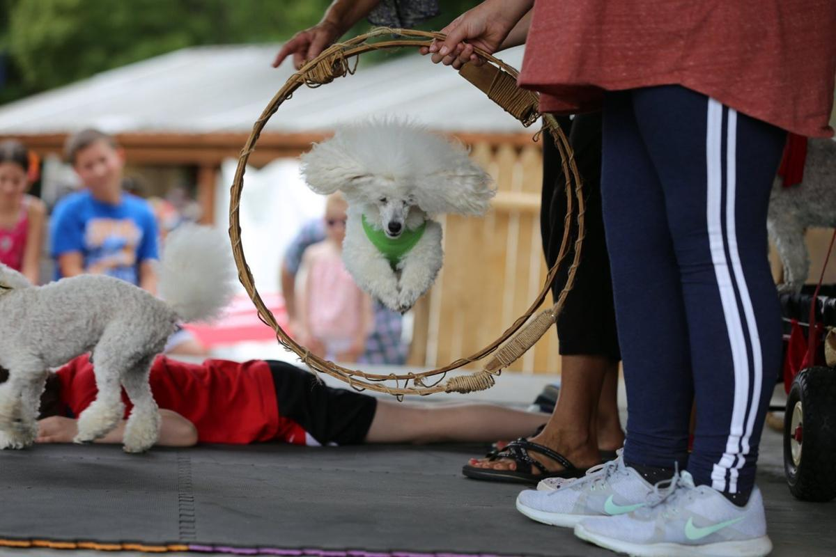 Four-legged friends invited to Saturday's Bark in the Park