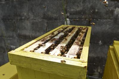 636349743845045259-beekeeper-sell-0623-11pcolor.jpg