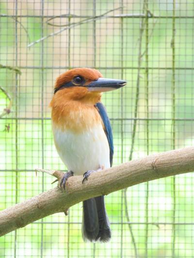 Sihek Female