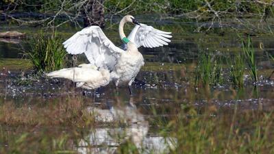 Recovering America's Wildlife Act