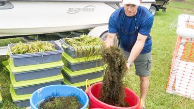 Water gardening photo