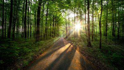 sun rays coming through green and tall trees during daytime